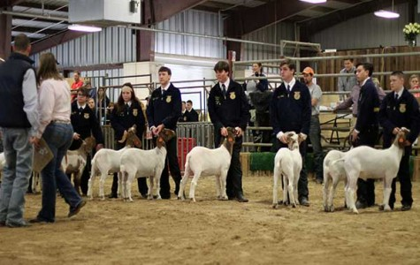 FFA Show Winners Announced