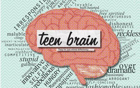 Understanding the teen brain