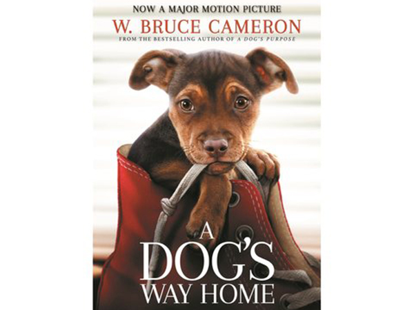 Movie Review: A Dog's Way Home