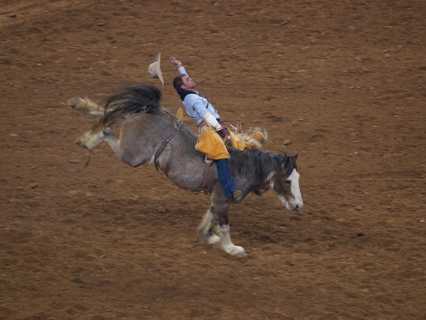 Houston Livestock Show and Rodeo comes to town